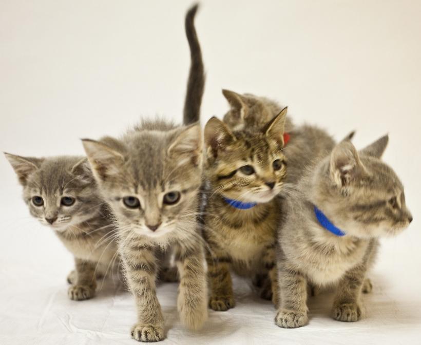 5 kittens marching_Ed Serecky