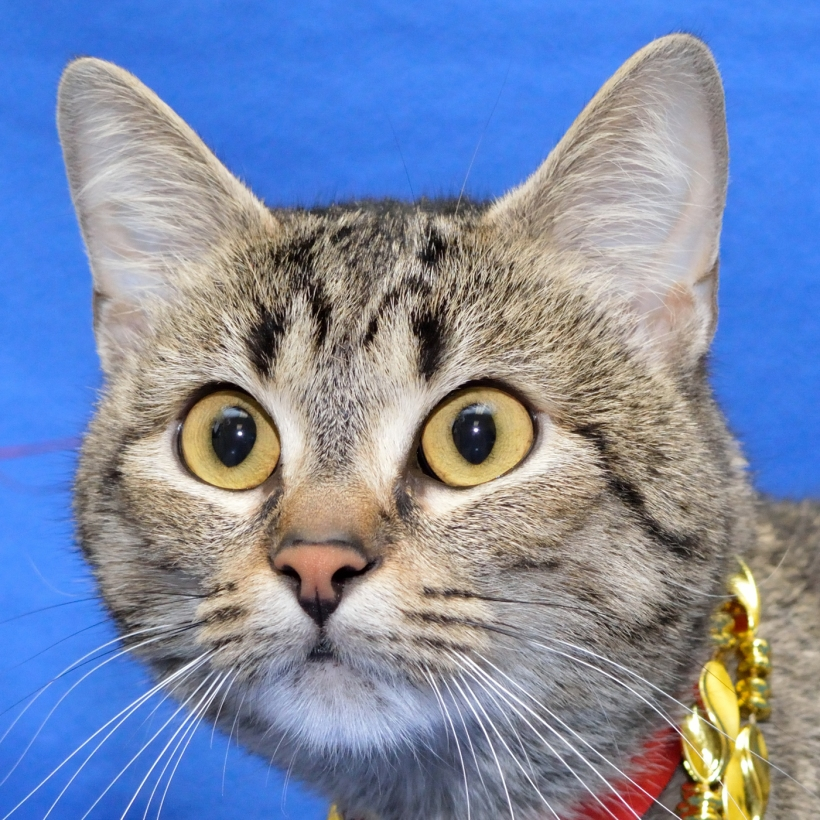 Healthy cats are able to go up for adoption immediately upon arrival to MHS, instead of waiting for four days and increasing their chances of getting sick.